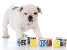 Dog obedience training Stock Photos