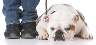 Dog obedience training Stock Image