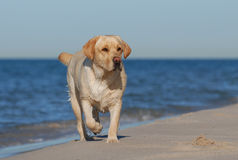 Dog an ocean royalty free stock photos