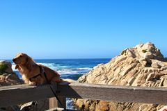 Dog and ocean. Dog lying on viewpoint balcony handrail at the ocean, with some rocks behind it Stock Photos