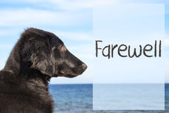 Dog At Ocean, Text Farewell Royalty Free Stock Photo