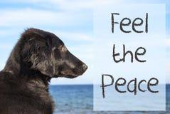 Dog At Ocean, Text Feel The Peace Stock Photos