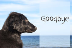 Dog At Ocean, Text Goodbye. English Text Goodbye. Flat Coated Retriever Dog Infront Of Ocean. Water In The Background Royalty Free Stock Photography