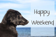 Dog At Ocean, Text Happy Weekend. English Text Happy Weekend. Flat Coated Retriever Dog Infront Of Ocean. Water In The Background Royalty Free Stock Photography