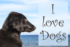 Dog At Ocean, Text I Love Dogs Royalty Free Stock Photos