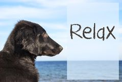 Dog At Ocean, Text Relax Royalty Free Stock Photography