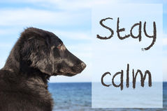 Dog At Ocean, Text Stay Calm Royalty Free Stock Image
