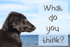 Dog At Ocean, Text What Do You Think Royalty Free Stock Photos