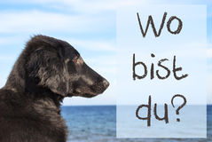 Dog At Ocean, Wo Bist Du Means Where Are You Royalty Free Stock Photography