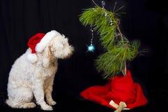 Dog och fatta julgranen Arkivfoton