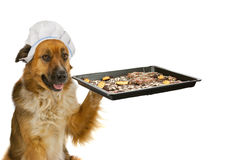 Dog  is offering christmas cakes Stock Image