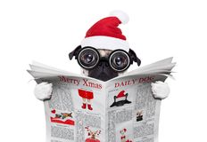 Dog office worker reading newspaper on  christmas holidays Royalty Free Stock Photo