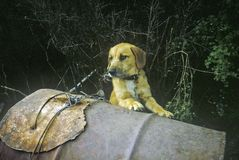 Dog on oil tank, New Zealand Royalty Free Stock Image