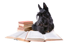 Dog with old books stock photo