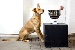 Dog with an old cook stove Stock Photo