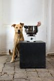 A dog with an old cook stove Royalty Free Stock Image