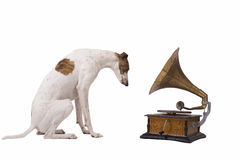 Dog and old gramophone stock image