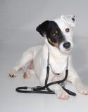 dog old stethoscope стоковая фотография