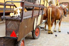 Dog on the old tourist cart in Dinkelsbuhl. Stock Images