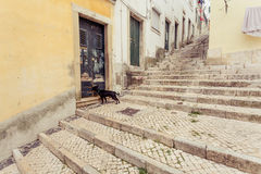 Dog in old town of Lisbon Royalty Free Stock Images