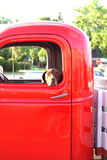 Dog in an old truck stock photo