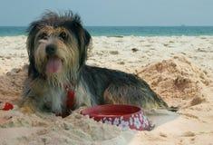 Dog On Beach Royalty Free Stock Image
