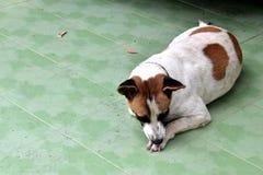 Dog. One dog plain , sad and Lonely waiting Stock Photo