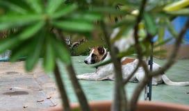 Dog. One dog plain , sad and Lonely waiting Stock Image