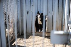 Dog in the open-air cage. Dog of black-and-white color behind a fencing lattice Stock Photos