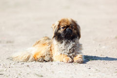 Dog in the open air. Royalty Free Stock Photos