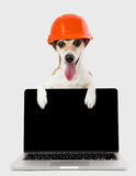 Dog in an orange construction helmet is holding a notebook. Dog jack russell terrier builder in a helmet and a laptop. Happy smile. Gray monochrome background Royalty Free Stock Photography