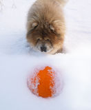 Dog and orange Stock Photo