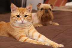 Dog and orange kitten  on the bed Royalty Free Stock Photos