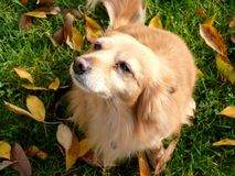 Dog in orchard. Dog on grass in orchard royalty free stock images