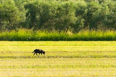 Dog out in the nature. A bucolic scenery. Royalty Free Stock Photography