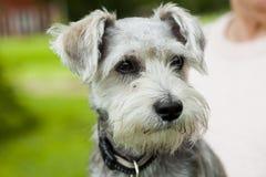 Dog outdoors Stock Photos