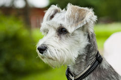 Dog outdoors Stock Photo