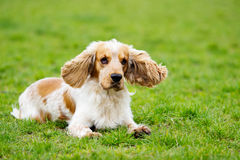 Dog outdoors Royalty Free Stock Images