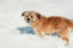 Dog outdoors in winter. Cute dog in the snow Royalty Free Stock Photography