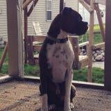 Dog  outside Royalty Free Stock Photos