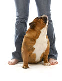 Dog and owner Stock Photography
