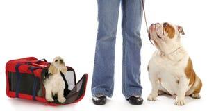 Dog owner Royalty Free Stock Photos