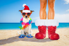 Dog and owner as santa claus on christmas at the beach Stock Image