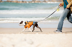 Dog with owner on a beach Stock Photo
