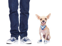 Dog and owner Royalty Free Stock Photos