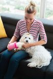 Dog Owner Cleaning Paws To Little Pet At Home. Young hispanic blonde woman using dedicated tool to clean legs and paws of her poodle dog. Pet care and hygiene Stock Photos