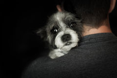 Dog and owner close together royalty free stock images
