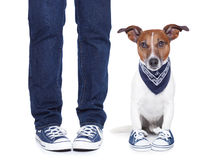 Dog owner  and dog Stock Photos