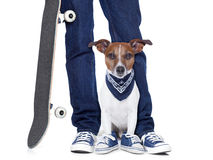 Dog owner  and dog. Dog owner with dog both wearing sneakers and a skateboard Stock Photo