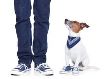 Dog owner  and dog. Dog owner with dog both wearing sneakers and a skateboard Royalty Free Stock Photos